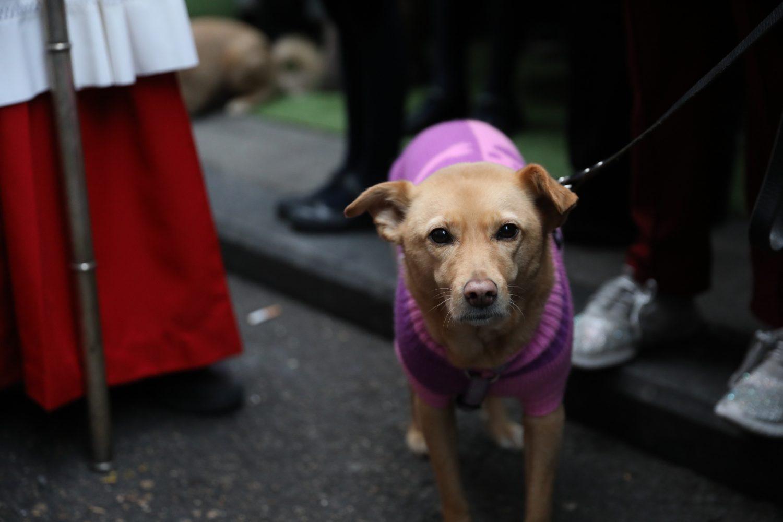 Un perro en San Antón