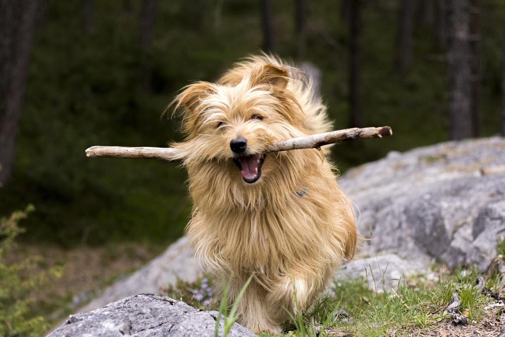 Perro de excursión